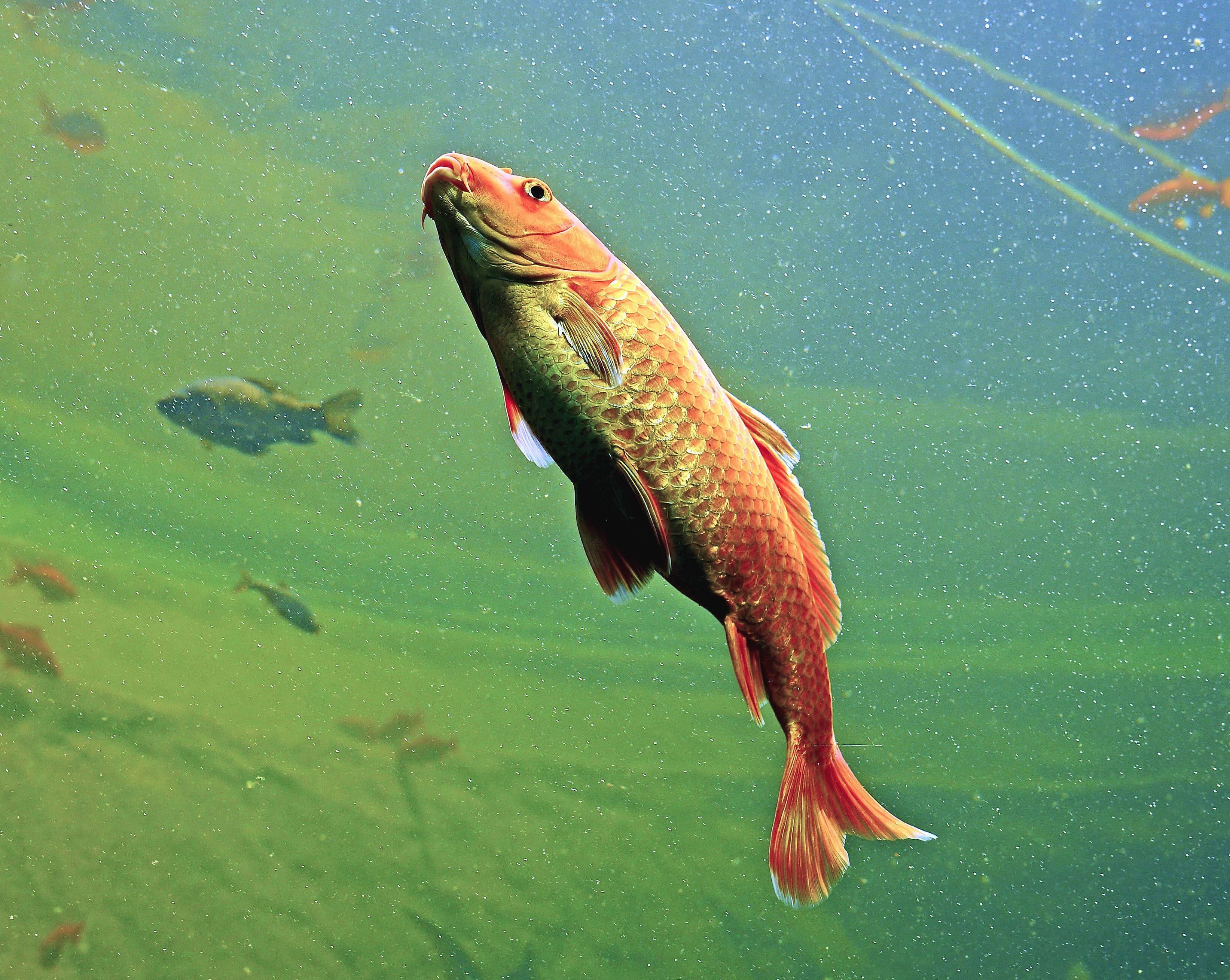 картинка рыбы плавают в воде это