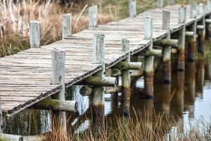 bridge, wood, lake, plant, plank, plant