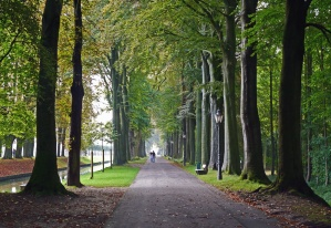 road, tree, park, canal, water, man, street lamp, leaf
