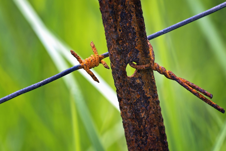 wire, metal, rust, plant, grass