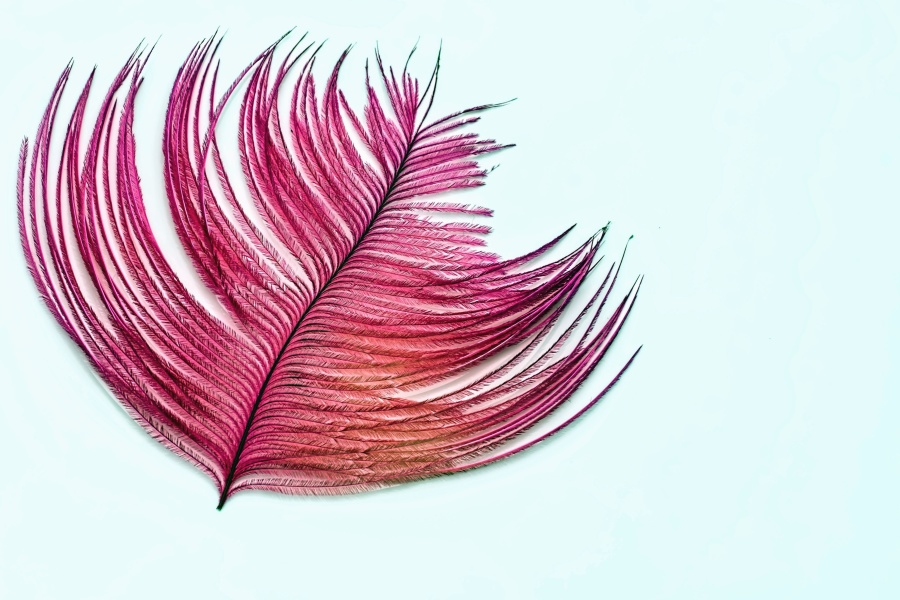 feather, design, red, macro