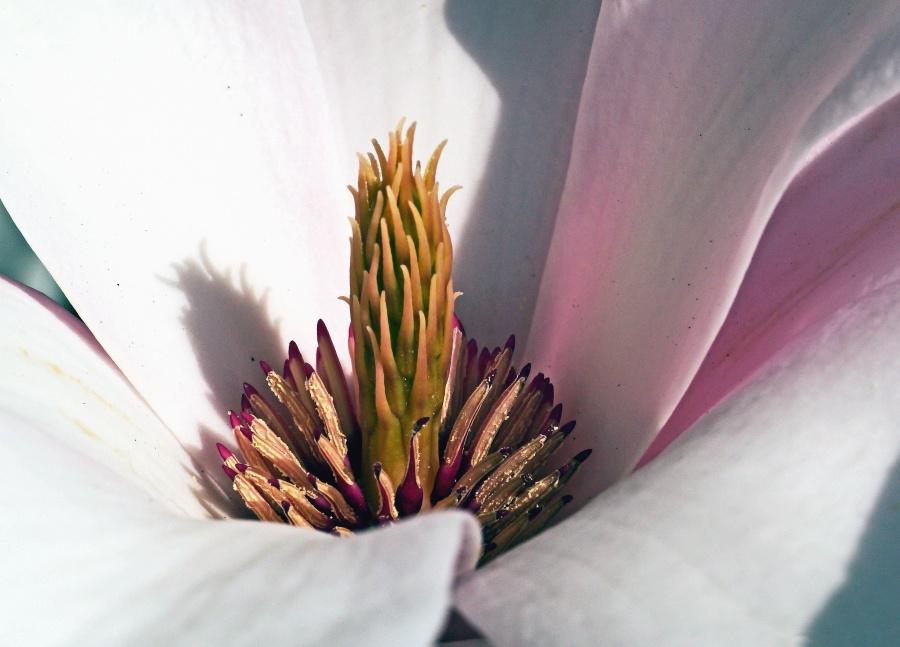petal, plant, flower, pistle, blooming, pollen, nectar, pollinating