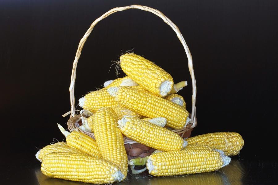 corn, agriculture, grain, food, basket