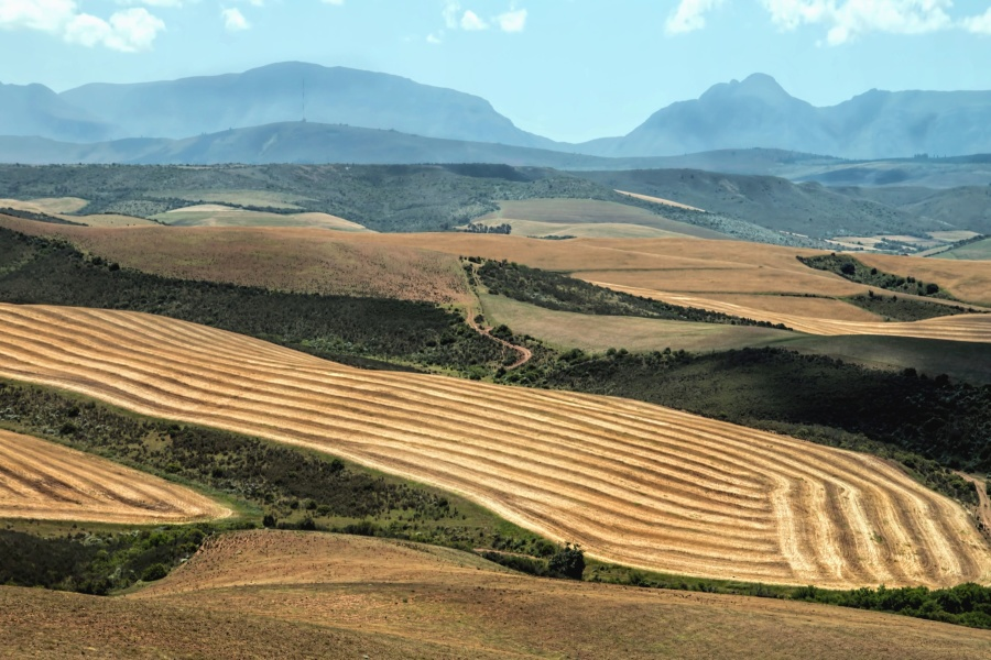 crops, agriculture, landscape, hill, mountain, field, farming, summer, sky