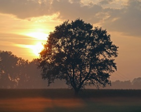 wood, sun, landscape, silhouette, fog, plant, treetop