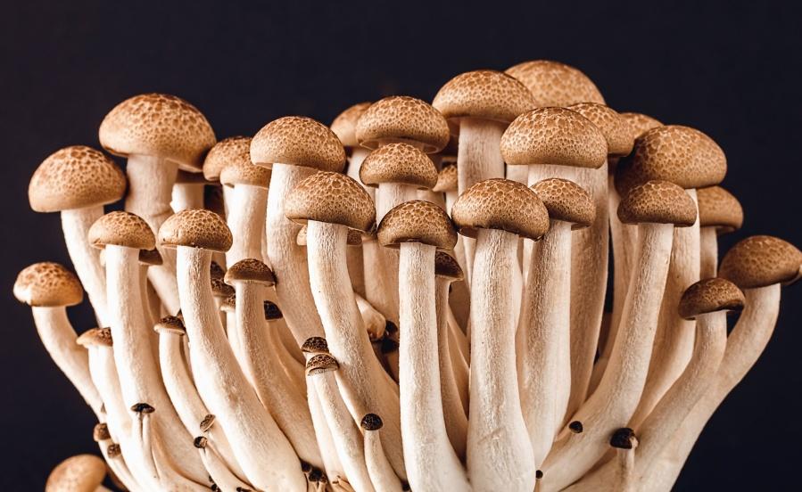 mushroom, plant, food, macro