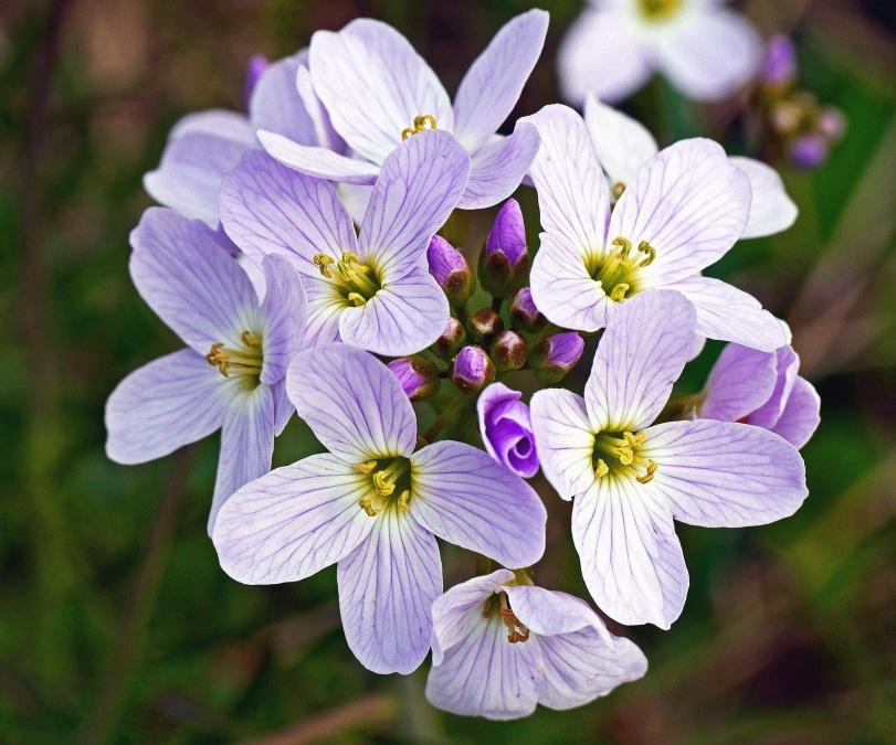 flower, plant, blossom, petal, pistil, garden, bloom, flower, flora