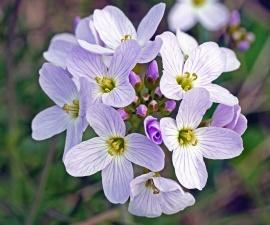 Fleur, plante, fleur, pétale, jardin, herbe, été, feuille