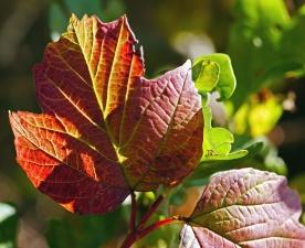 leaf, tree, plant, flora, garden