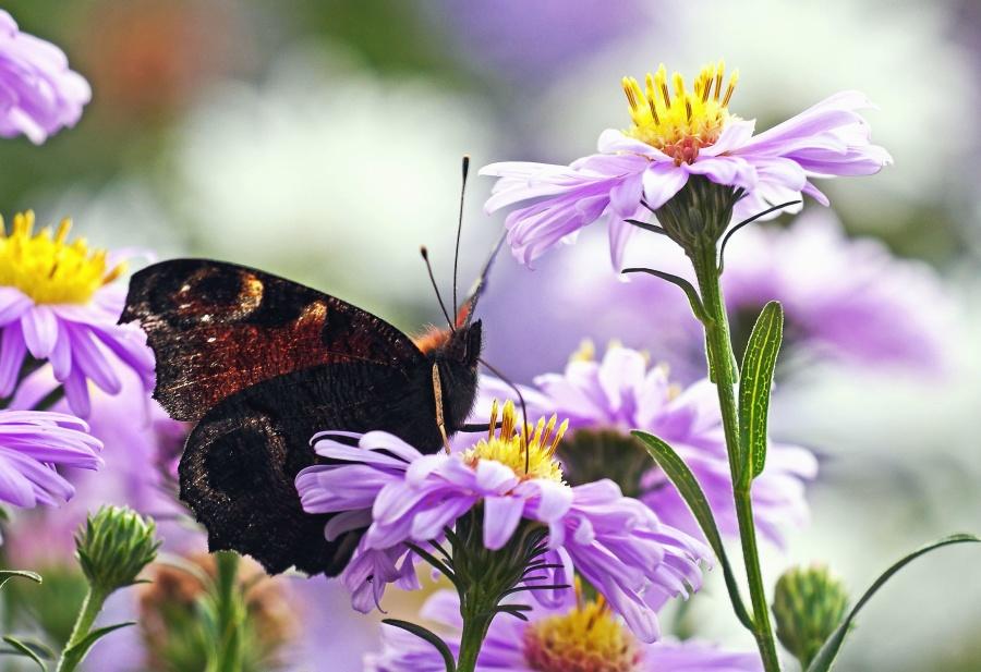 flower, insect, butterfly, plant, pink, garden, petal, flora, summer