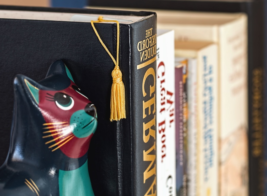 book, shelf, learning, study, figure, cat, collection