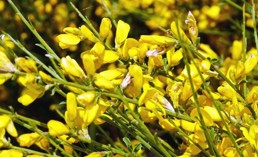flower, plant, flower, petal, leaf, flora, nature