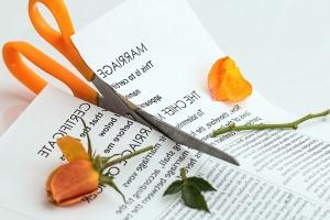 škare, ruža, cvijet, latica, papir, tekst, biljka