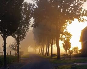 tree, landscape, grass, road, house, building, sun, sunset