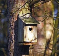 Schutz, Vogel, Baum, Zweig, Tier, Wald