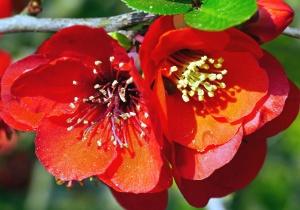 Fleur, branche, rouge, feuille, pétale, fleur, flore, pollen