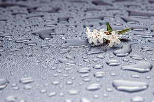 dew, water, flower, leaf, petal, texture, plant, flora