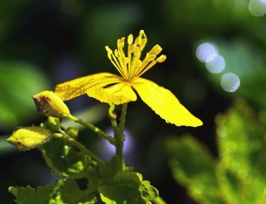 anlegget, blomst, bladet, blad, hage, flora