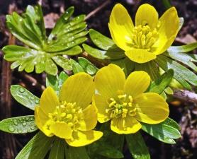 Blume, pflanze, kraut, flora, gelb, garten, blatt, mit blumen, blütenblatt