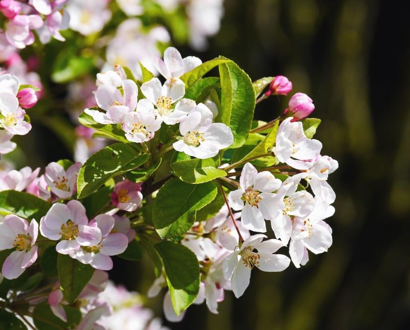 kostenlose bild blume pflanze blumenblatt garten mit blumen rosa blatt bl te flora. Black Bedroom Furniture Sets. Home Design Ideas