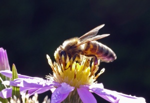 bee, flower, petal, pollen, insect, plant