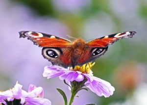 butterfly, flower, petal, colorful, color, plant, pollen, insect