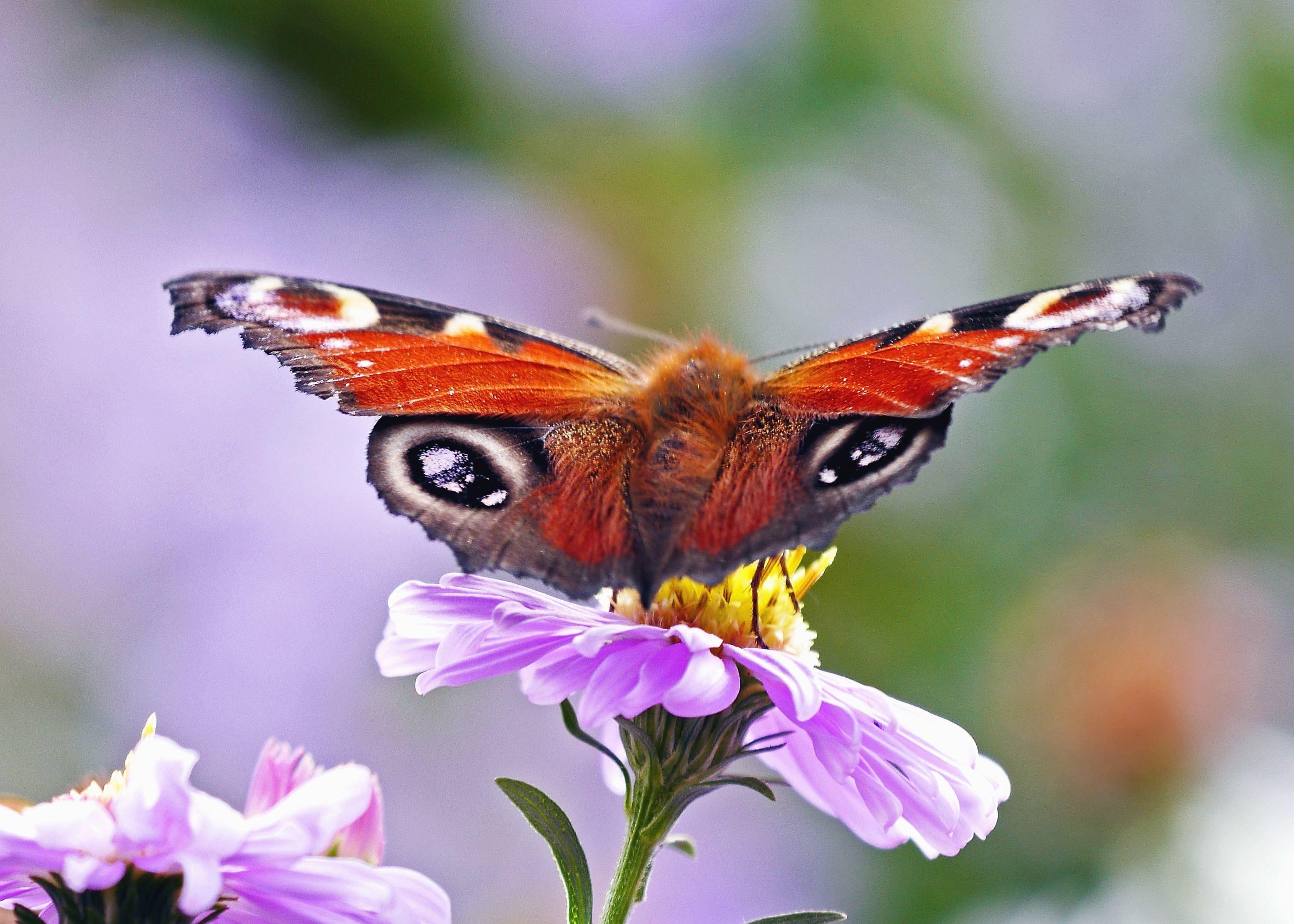 Image libre papillon fleur p tale color couleur - Papillon fleur ...