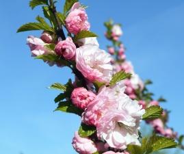 Fleur, pétales, branche, botanique, flore, feuille, ciel, printemps