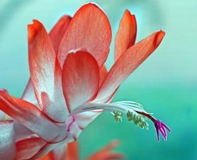 Petal, květin, rostlin, zahradní, barevné, list, barva, léto