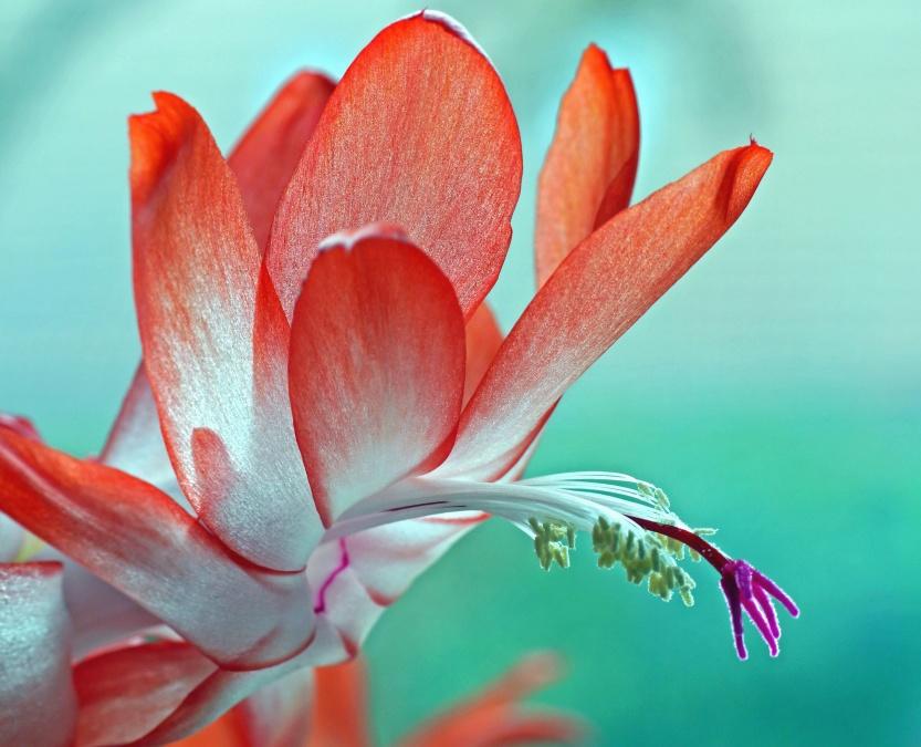 Imagine Gratuită Petale Flori Plante Gradina Colorate
