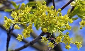 tree, branch, flower, shrub, petal, nature, flora, spring