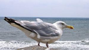 bird, feather, seagull, sea, water, beak, sky, animal