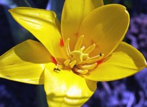 Amarillo, pétalo, insecto, flor, planta, flora, jardín, verano