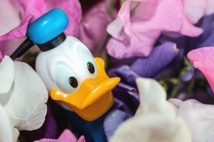 duck, toy, doll, cartoon, plastic