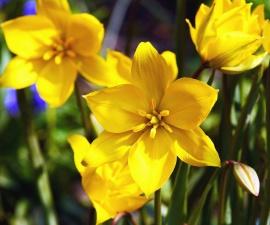 daffodil, flower, petal, plant, stem, leaf, pollen, nectar, spring
