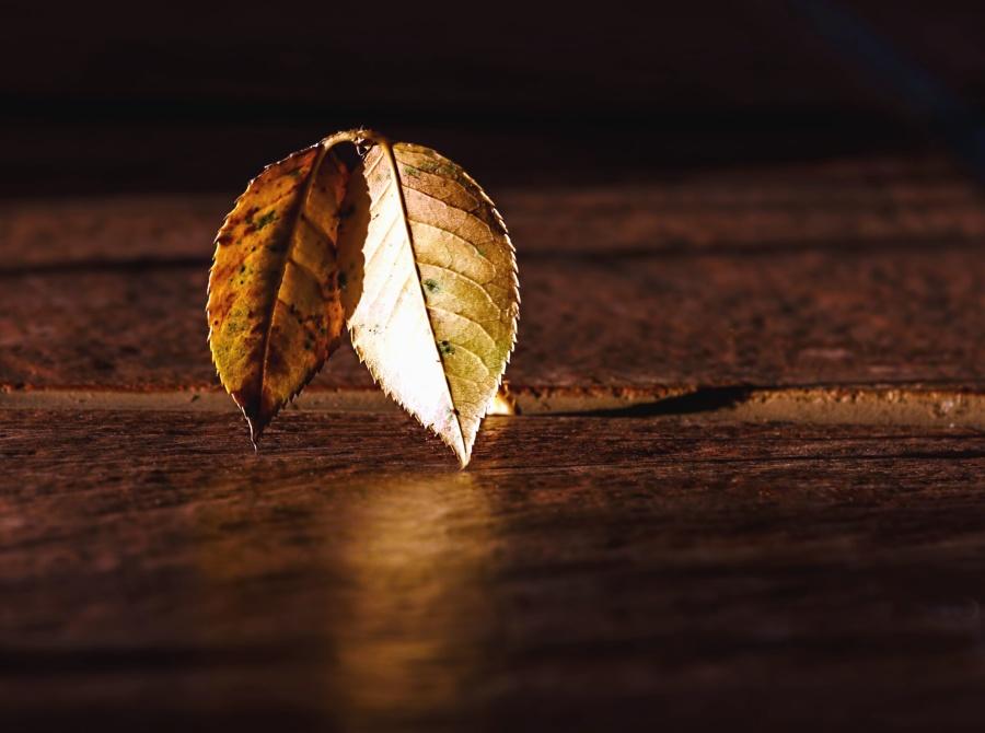 葉、木材、テーブル、テクスチャ、反射
