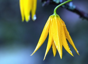 petal, water, wet, flower, plant, stalk, garden