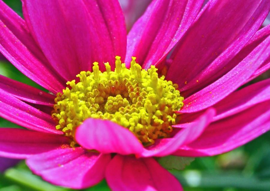 Polen, néctar, planta, flor, pétalo, jardín, naturaleza