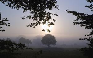 wood, forest, sun, fog, sky, meadow, grass, landscape