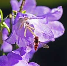 purple, flower, bee, plant, garden, insect, petal, branch