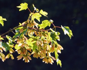 blad, tak, boom, plant, flora, Tuin