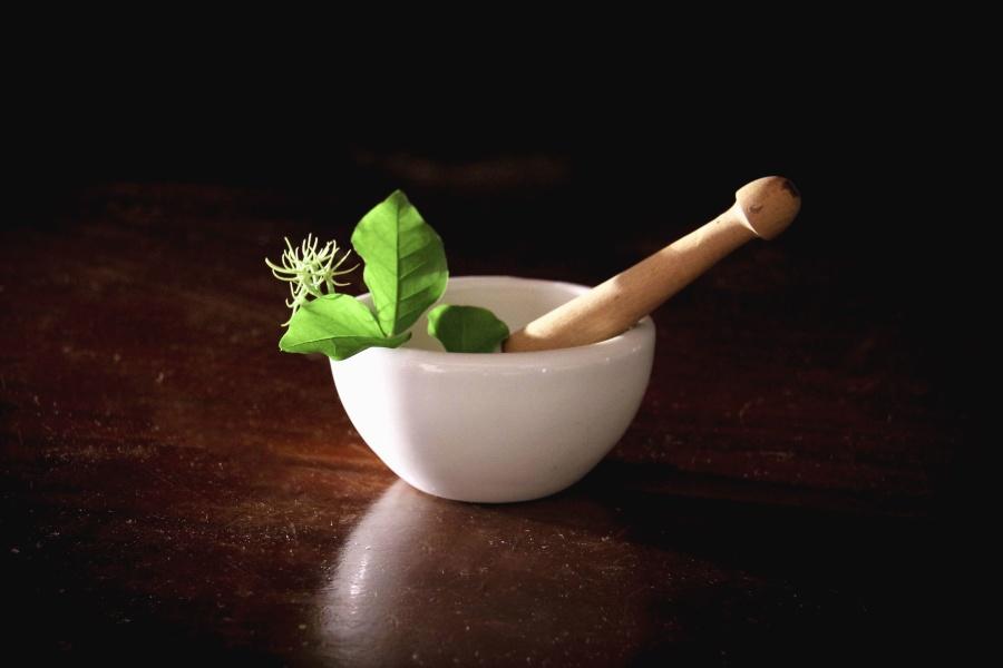 skål porcelæn, plante, blade, laboratorium