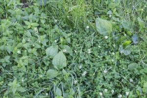 leaf, grass, plant, flora, flower, petal
