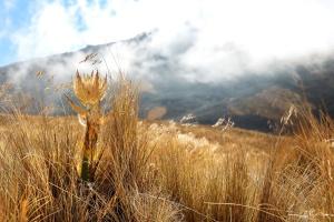 gress, eng, fjell, tåke, Sky, landskap