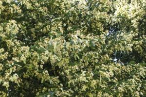 tree, leaf, plant, flora, forest, park, branch, spring