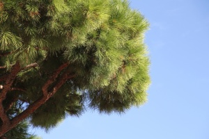 tree, sky, branch, leaf, plant, park