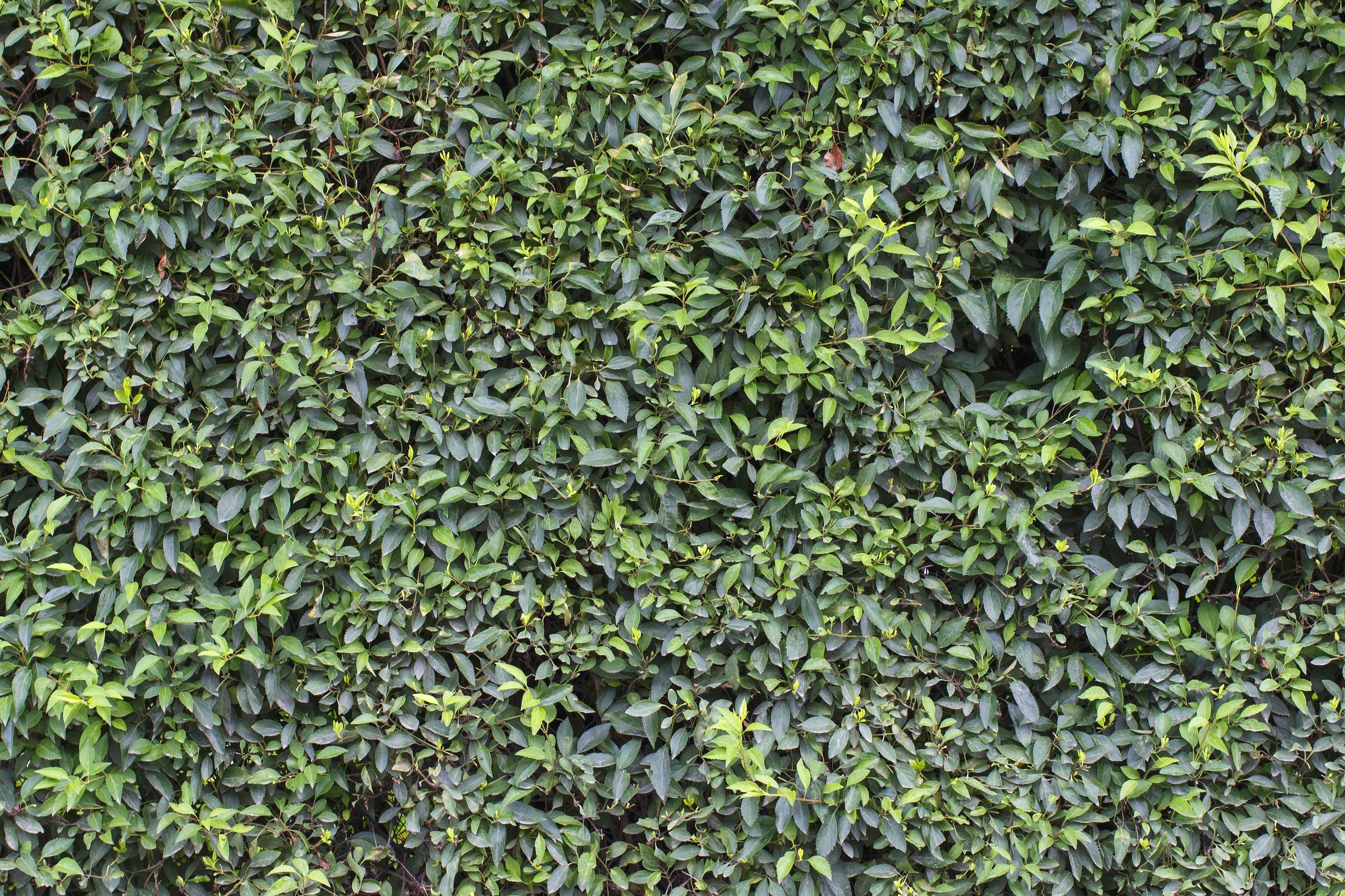 Kostenlose Bild Pflanze Blatt Flora Zaun Wachstum Garten