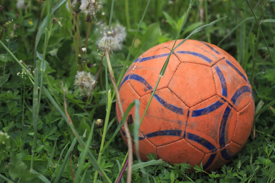 football, grass, plant, sport, recreation