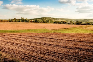 field, agriculture, sky, landscape, forest, hill