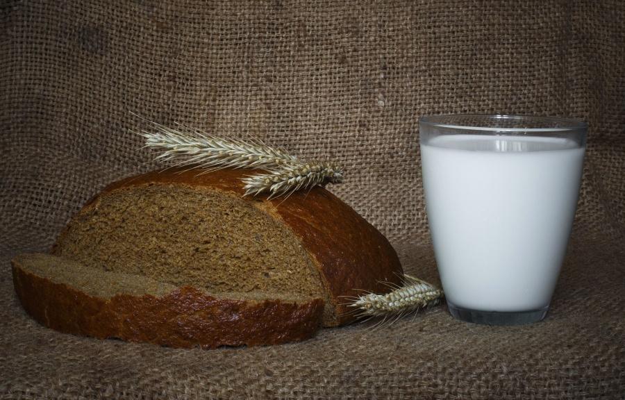 mlieko, chlieb, zrno, potraviny, výživa, energie